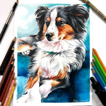 2- Australian Shepherd by Lucky978