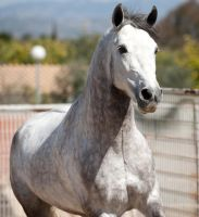 Stock Horse 11 by stock-provider