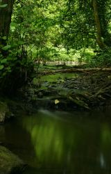 River stock 4 by AngiWallace