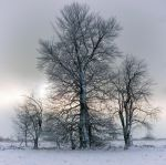 trees and snow.... by rhipster