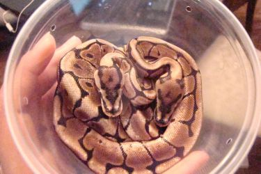 Cup o Snakes by evilmind2