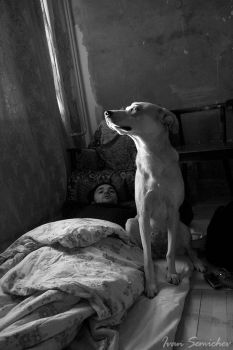 dog and idler by voliver