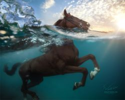 One Horse Power. One Ocean Life. by Vitaly-Sokol