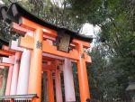 Fushimi Inari Shrine by mackymole