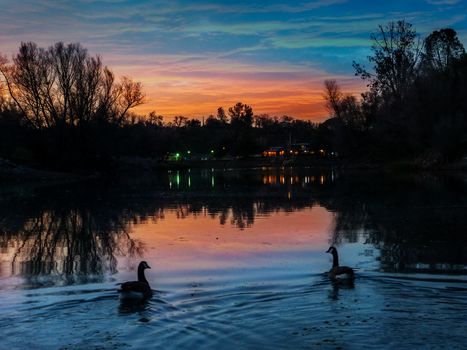 Coarsegold California Pond 2014 by Royce-Barber