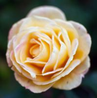 Layers of yellow by questor886