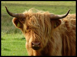 Scotland IV - The Cow... by MichiLauke
