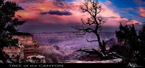 Tree of the Canyon by AugenStudios