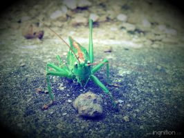 Grasshopper in motion 1 by Ingnition