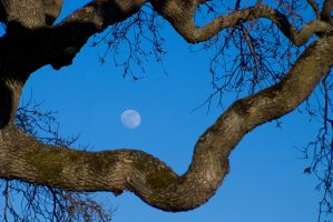 Moon in the tree by IanTheRed