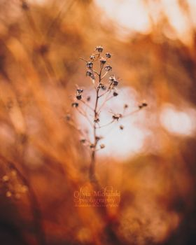Bokeh on Fire. by OliviaMichalski