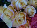 Roses 5 by greenaleydis-stock
