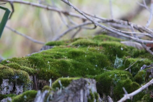 Mossy by ArtistStock