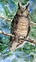 Great horned owl by Halwen