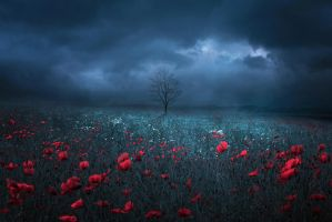 field of red by BaxiaArt