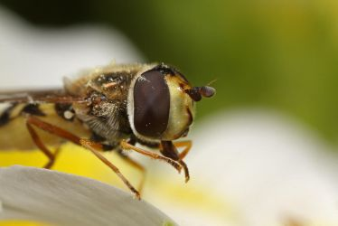 Hover close up by Alliec