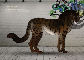 Shedu cat male 139 by Templado