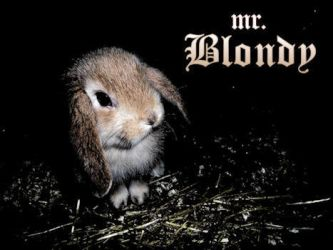 Blondy Bunny by muybonbon