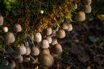Tiny Mushrooms by sulevlange