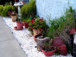 Potted Plants by segerquist