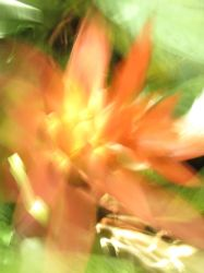 fire lily blur by synesthesea