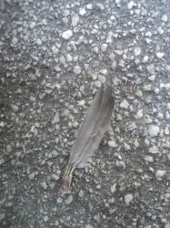 Three feathers of a dead bird by ed---end
