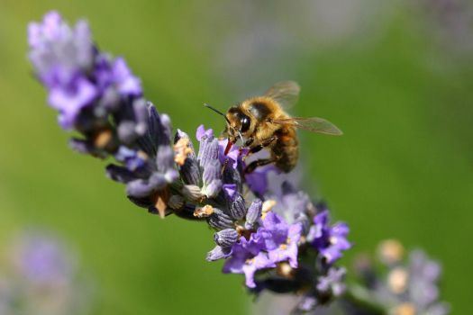 busy bee by scoot75