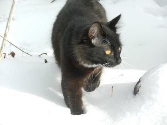 Artemis in snow day 2 12 by dottypurrs