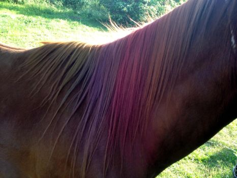 chalk pastel on a red mane by o-shea