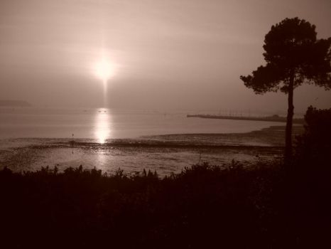 Beauty in sepia by Holly-berry4