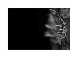 inconspicuously by Suvelis