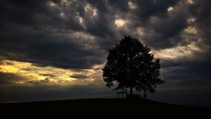 Lonely tree by RedstoneArmy