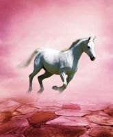 White Horse by Holly6669666