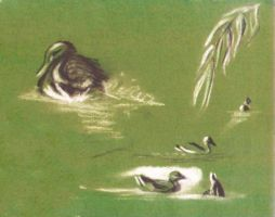 some old sketch of the ducks by krysiaida