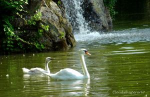 The Cygnet, the Pen and the Waterfall by Cloudwhisperer67