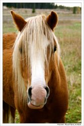 horse by eos400d