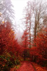 Bloodred Forest XIX by Aenea-Jones