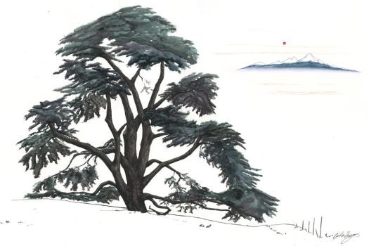 The Lebanese Cedar by inasmuch