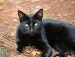 Yellow Eyes by DracoFlameus