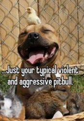 Your Typical Pitbull by Tigerwolflover