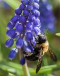 Pollination by rctfan2