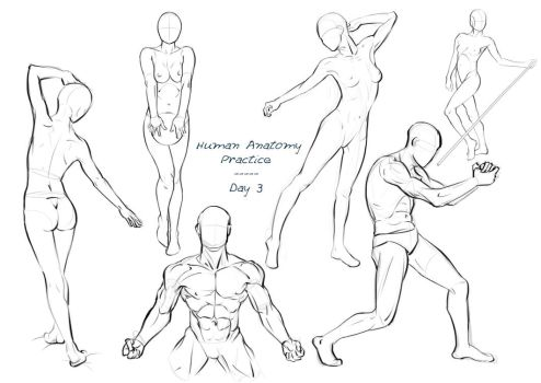 Anatomy Practice - Day 3 by Nixri