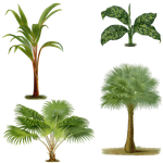 1800's Plants 2 PNG by chaseandlinda