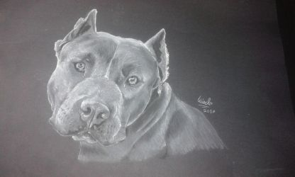 Cane corso ~Realista~ by Wind-destroyer5