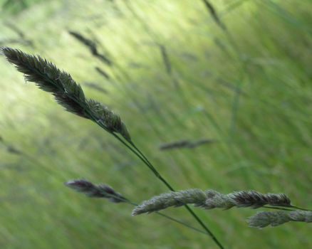 Simple Grass by Aguafina