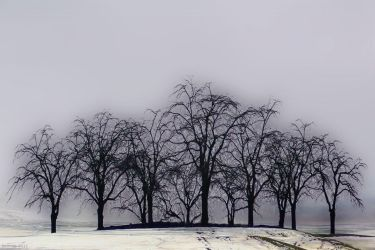 Ghosts by hewsan