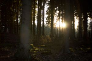 Forest at sunset 4 by mprangenberg