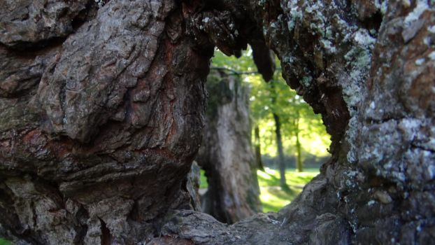Hole in the big tree by chetje