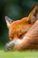 Sleepy 2 by Alannah-Hawker