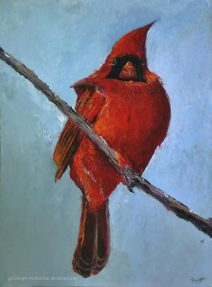 Cardinalis cardinalis by Goodnight-Melbourne